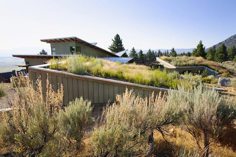 eastern sierra living roof